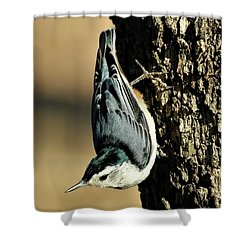 White-breasted Nuthatch On Tree Shower Curtain by Sheila Brown