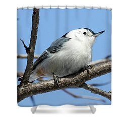 White-breasted Nuthatch Perched Shower Curtain