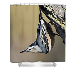 Shower Curtain featuring the photograph White-breasted Nuthatch by Stephen Flint
