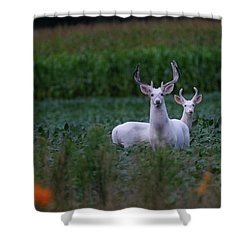 White Bucks Shower Curtain
