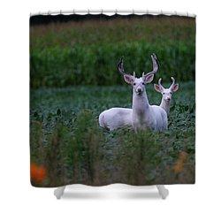 White Bucks Shower Curtain
