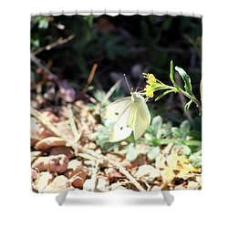 White Butterfly On Goldenseal Shower Curtain by Colleen Cornelius