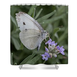 White Butterfly On Lavender Shower Curtain