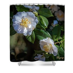 Shower Curtain featuring the photograph White Camelia 02 by Gregory Daley  PPSA