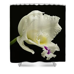 White Cattleya Orchid  Shower Curtain