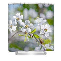 Shower Curtain featuring the photograph White Cherry Blossoms In Spring by Alexander Senin