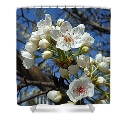 White Blossoms Blooming Shower Curtain