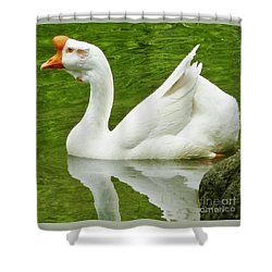 Shower Curtain featuring the photograph White Chinese Goose by Susan Garren