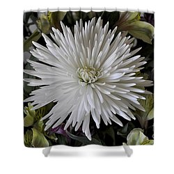 White Chrysanthemum Shower Curtain