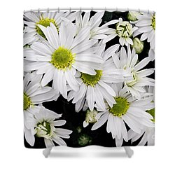 White Chrysanthemums Shower Curtain