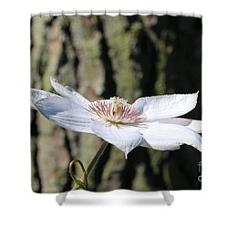 White Clematis Against Pine Shower Curtain