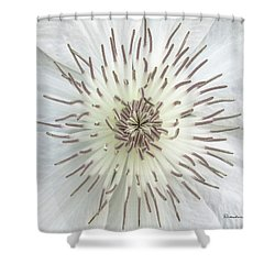 White Clematis Flower Macro 50121c Shower Curtain