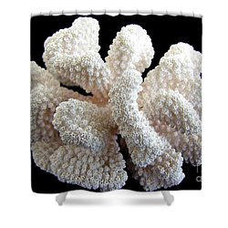 White Coral Shower Curtain by Mary Deal