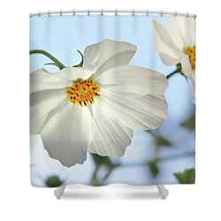 Shower Curtain featuring the photograph White Cosmos-1 by Nina Bradica