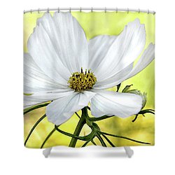 White Cosmos Floral Shower Curtain