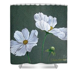 Shower Curtain featuring the drawing White Cosmos by Phyllis Howard