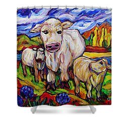White Cow And Twin Calves Shower Curtain by Dianne  Connolly