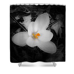 White Crocus - Edit Shower Curtain