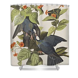 White Crowned Pigeon Shower Curtain by John James Audubon