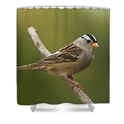 White-crowned Sparrow Shower Curtain by Doug Herr
