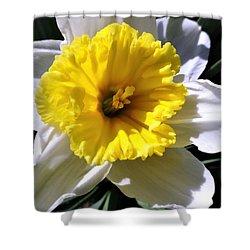 White Daffodil Closeup Shower Curtain
