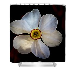 Shower Curtain featuring the photograph White Daffodil by Jay Stockhaus