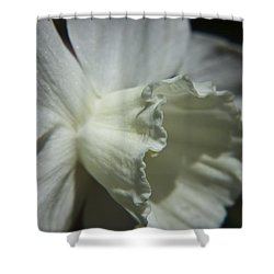 White Daffodil Shower Curtain by Teresa Mucha