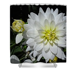 White Dahlias Shower Curtain