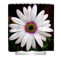 White Daisy Shower Curtain