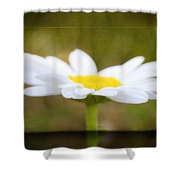 Shower Curtain featuring the photograph White Daisy by Eduard Moldoveanu