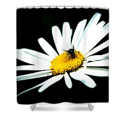 Shower Curtain featuring the photograph White Daisy Flower And A Fly by Alexander Senin