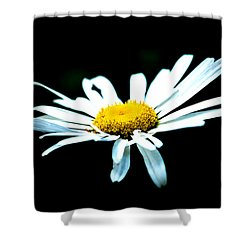 Shower Curtain featuring the photograph White Daisy Flower Black Background by Alexander Senin