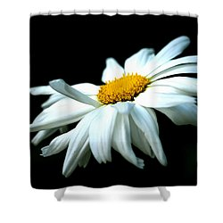 Shower Curtain featuring the photograph White Daisy Flower In The Wind by Alexander Senin