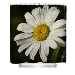 White Daisy Flower Shower Curtain