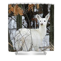 White Deer Vistor Shower Curtain by Brook Burling