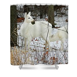 White Deer With Squash 2 Shower Curtain by Brook Burling