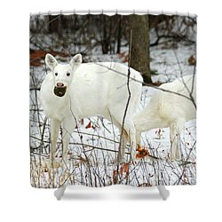 White Deer With Squash 3 Shower Curtain by Brook Burling