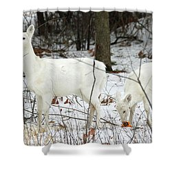 White Deer With Squash 4 Shower Curtain by Brook Burling