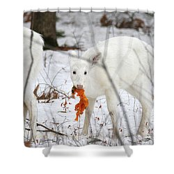 White Deer With Squash 5 Shower Curtain by Brook Burling