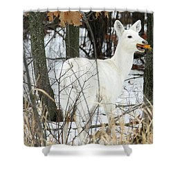 White Doe With Squash Shower Curtain by Brook Burling