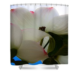 White Dogwood Flower Shower Curtain by David Patterson
