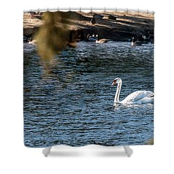 Shower Curtain featuring the photograph White Duck by Onyonet  Photo Studios