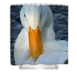 White Duck Primping Shower Curtain