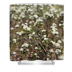 Shower Curtain featuring the photograph White Dusty Maidens  by Suzanne Oesterling