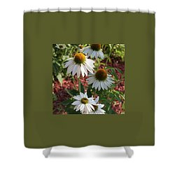 White Echinacea Shower Curtain by Suzanne Gaff