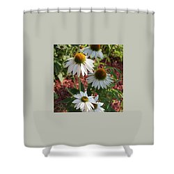 White Echinacea In Pastel Shower Curtain by Suzanne Gaff