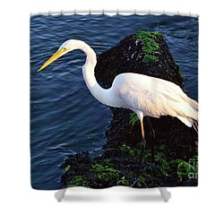 White Egret At Sunrise - Barnegat Bay Nj  Shower Curtain