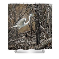 Shower Curtain featuring the photograph White Egret by David Bearden