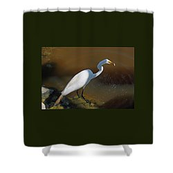 White Egret Fishing For Midday Meal Shower Curtain
