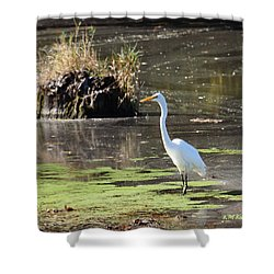 White Egret In The Shallows Shower Curtain